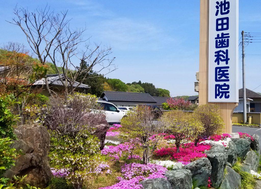 4月中旬~5月中旬に咲く芝桜